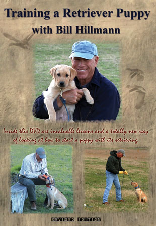 Training a Retriver Puppy DVD with Bill Hillmann