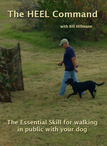 The Heel Command - The Essential Skill for walking in public with you dog